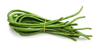 tanaman kacang panjang